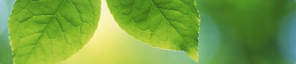 About Us - BMC Landscape Management