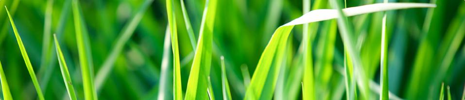 Landscape Maintenance - BMC Landscape Management