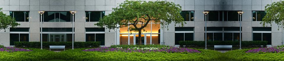 Tree Services - BMC Landscape Management